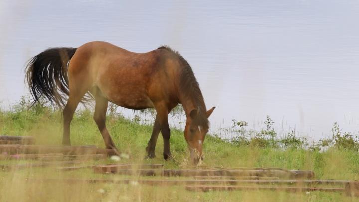 Пастораль с лошадьми и козами: любуемся атмосферными видами архангельских деревень