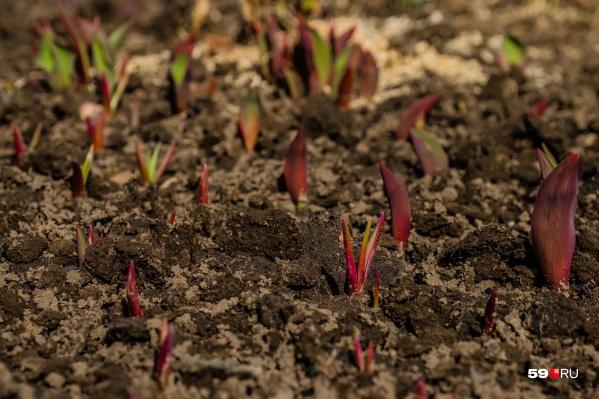 Благодаря новому удобрению в почве сохраняется больше питательных веществ для следующих посевов
