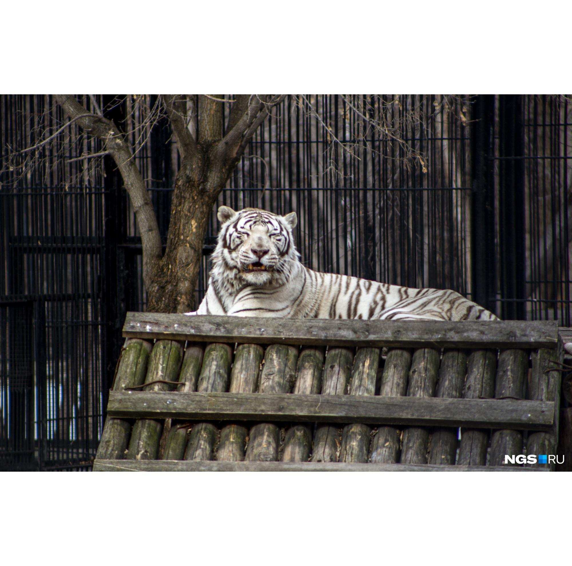 Рано или поздно гости в зоопарк вернутся, а пока там спокойствие и тишина