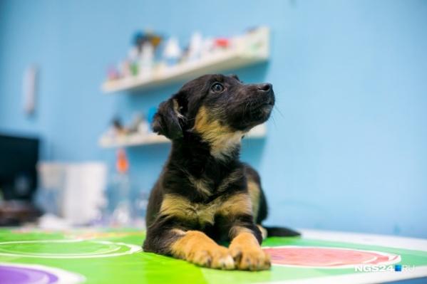 Собаку нашли в приюте компании, которая занимается отловом