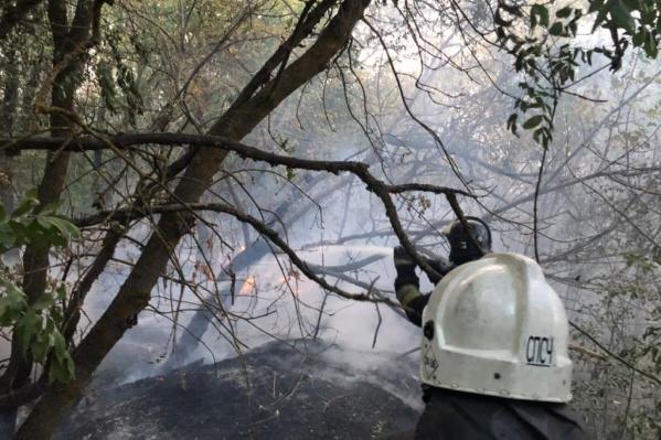 Огонь охватил около 430 гектаров площади
