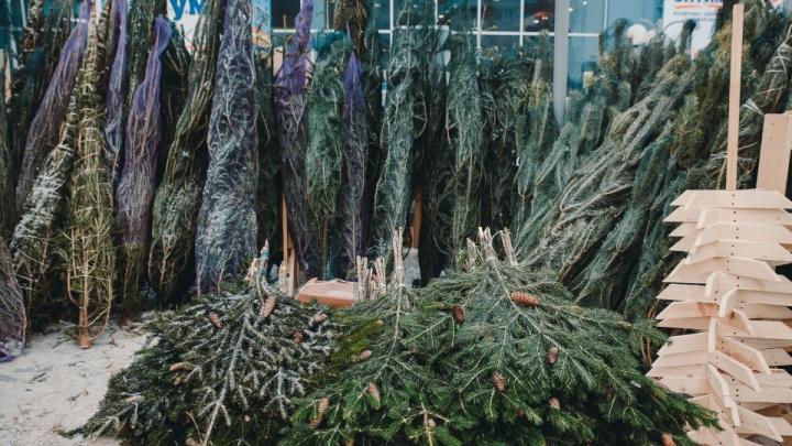 В лес за елками: можно ли тюменцам самостоятельно срубить деревце к Новому году