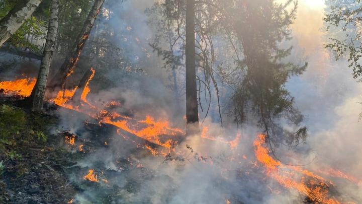 Во время тушения лесного пожара в Башкирии погиб волонтер
