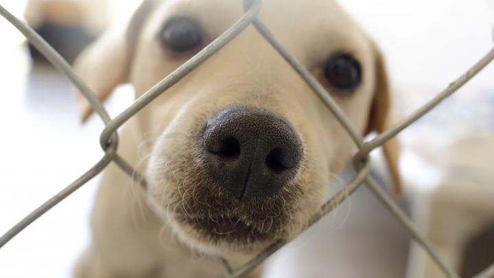 В Перми завершили строительство нового муниципального приюта для собак