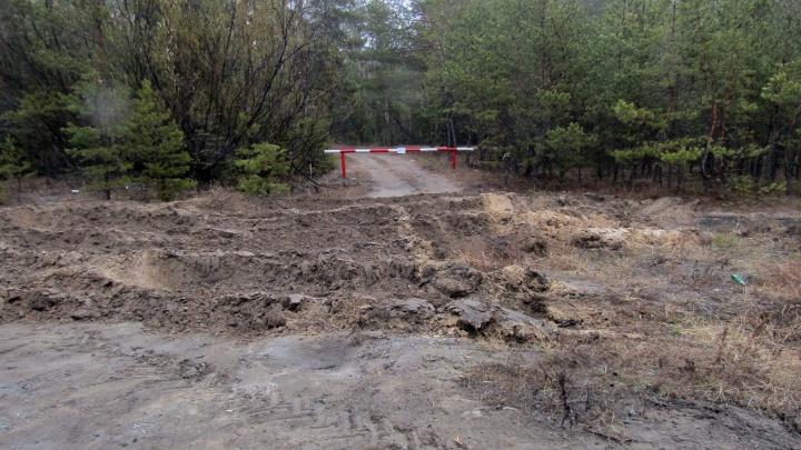 В Зауралье запрет на посещение лесов продлили середины мая