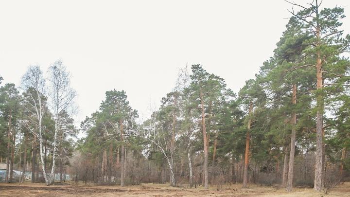 Юргамышский лесхоз попытался обжаловать решение суда о взыскании с него более 6 миллионов рублей