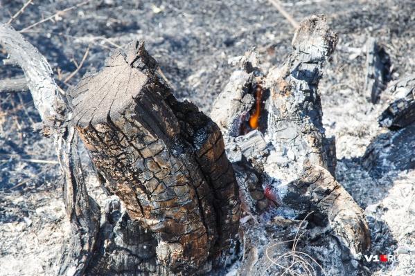На месте вымирающих деревьев новые просто-напросто не растут