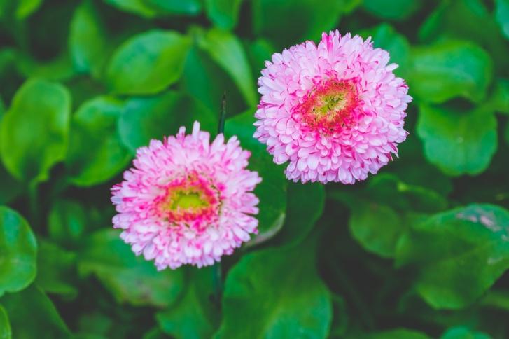 Полевые цветы во дворах не редкость