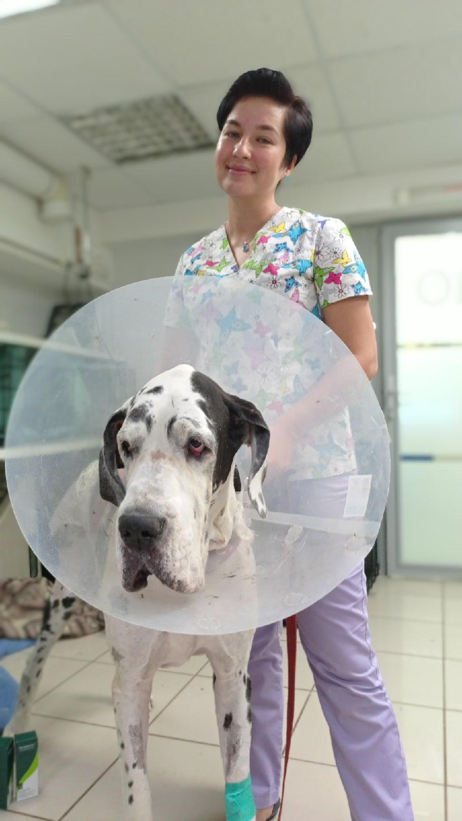 Лечащий врач Николь Нелли Тунекова после восстановление собаки