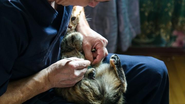 Если домашний питомец болен: как вызвать в Уфе скорую ветеринарную помощь