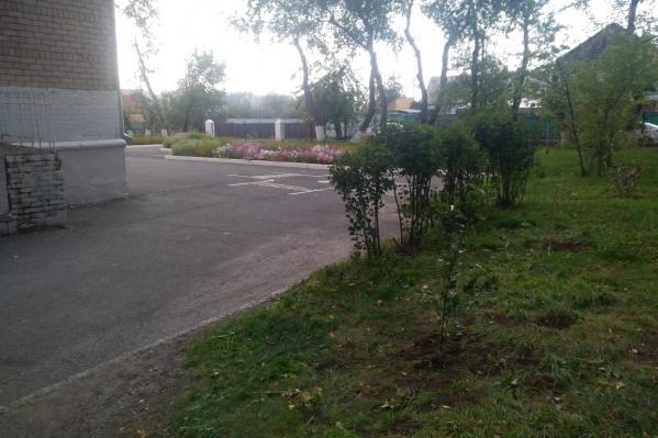 Саженцы высадили на территории школы № 71