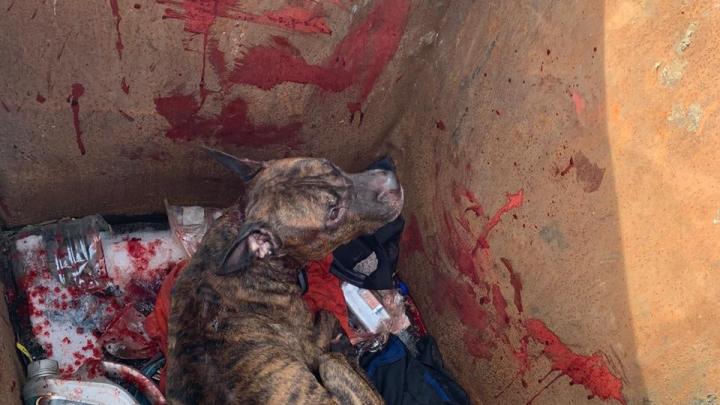 Волонтеры достали окровавленную породистую собаку из мусорного бака в Екатеринбурге