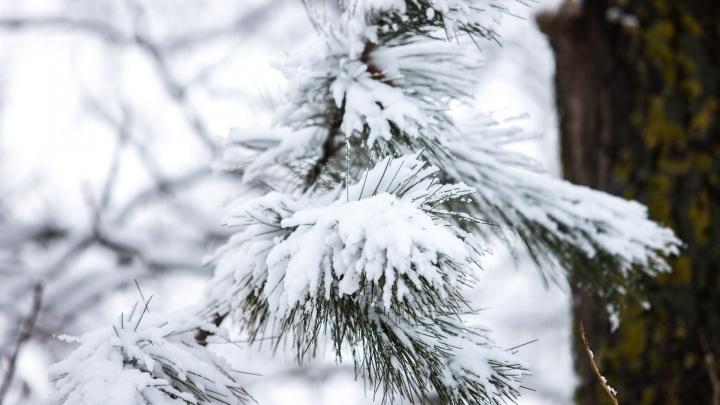 Метель, мороз и гололед: в Ростовской области резко ухудшится погода
