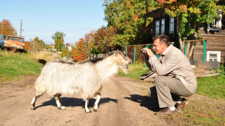 Пожарить шашлыки и покормить животных на ферме: где отдохнуть осенью в окрестностях Архангельска