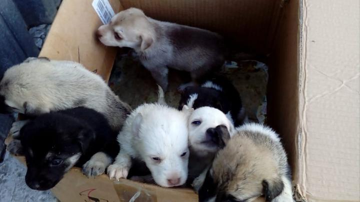 «Нам обидно и больно»: Центр по проблемам домашних животных отказался брать подкинутых им щенков