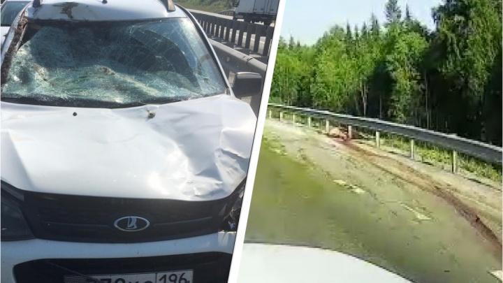 «Вся дорога в крови, туша лежит в кювете»: под Екатеринбургом водитель «Калины» сбил лося