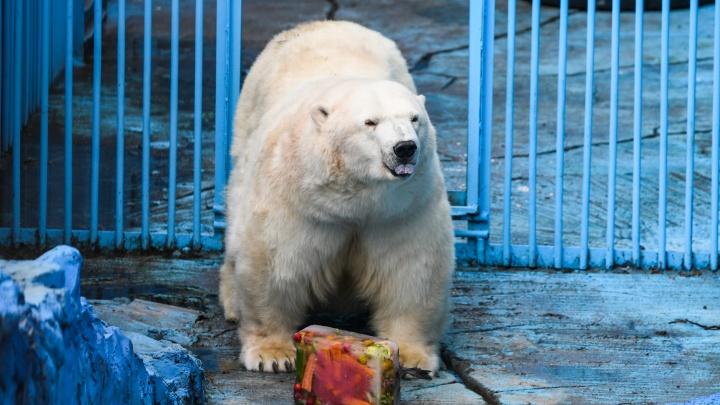 В Екатеринбурге не нашлось места для нового зоопарка