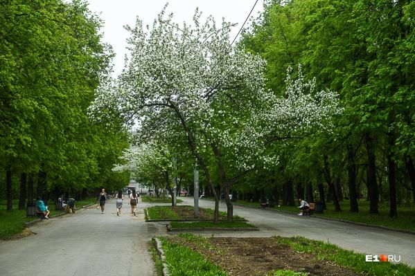Главная аллея в парке XXII Партсъезда нуждается в реконструкции