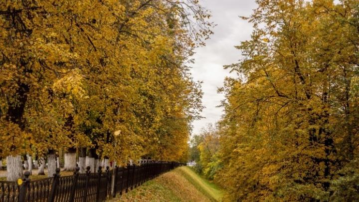 Пора шуршать: 16 фото, доказывающих, что осень — это очень уютно