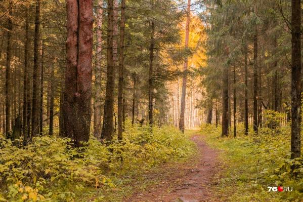 В Ярославской области заблудившаяся женщина увязла в болоте