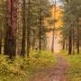 «Несли из болота на руках»: в Ярославской области спасли заблудившуюся женщину