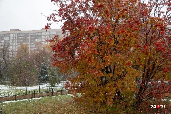 А вы ждете первого снега? Рассказываем, когда он может выпасть в нашем городе