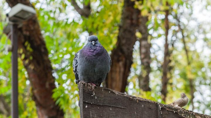 В Прикамье похолодало резко и надолго, но есть шанс, что бабье лето еще вернется