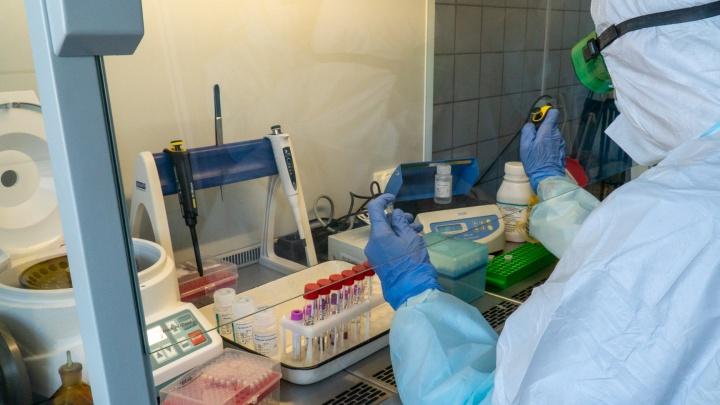 В Зауралье за сутки темп прироста заболеваемости COVID-19 составил 3,6%. В регионе 7 новых случаев