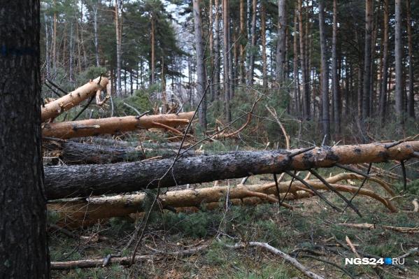 Незаконно снесли около пяти сотен деревьев