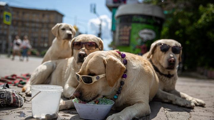 «Душа моя тефлоновая»: хозяин знаменитых собак в очках рассказал, кто он и как сделать мир счастливым