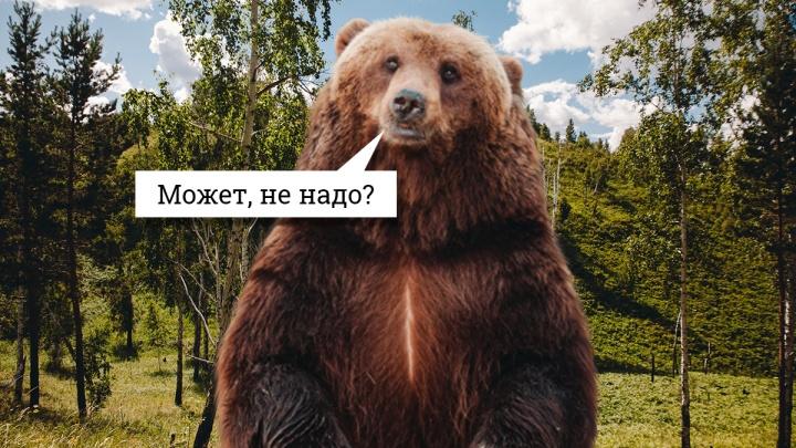 «Федя, дичь!» На кого можно охотиться в тюменских лесах и сколько стоит завалить медведя