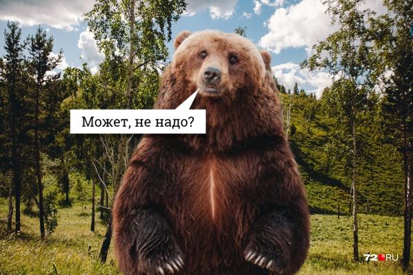 Численность бурых медведей в Тюменской области — 2687, за сезон 2020–2021 года разрешено добыть 329 мишек