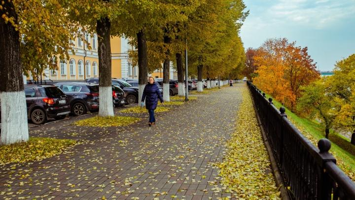 Дожди зарядят на три месяца: синоптики дали прогноз на осень-2020