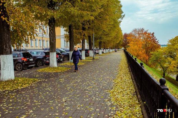 Синоптики говорят, что осень в Ярославле будет дождливой
