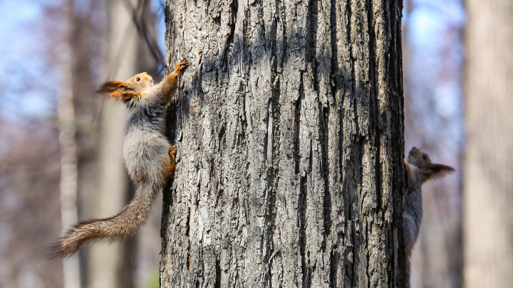 Пока все дома: бельчата встречают теплые дни в уфимском парке