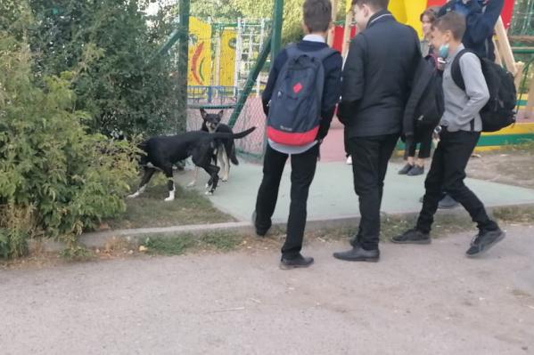 Собаки «проскальзывают» через дырки в заборе