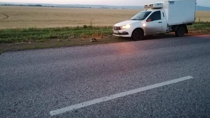 В Башкирии в ДТП погибли два пешехода