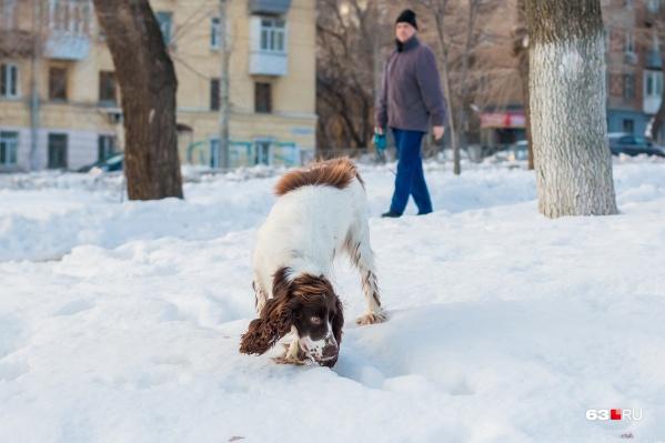 С помощью гаджета владелец может легко найти сбежавшее животное