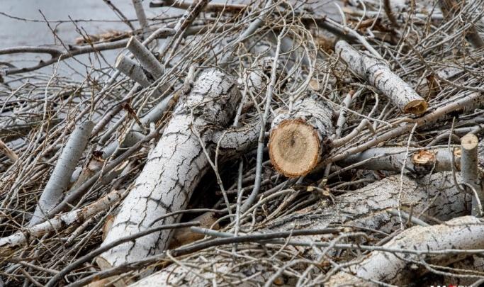 Некрасиво и опасно: прокуратура запретила мэрии Волгограда варварски опиливать деревья