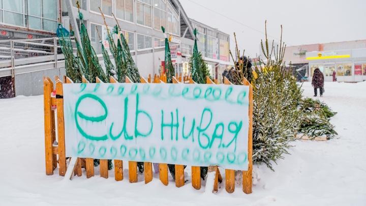 В Пермском крае начали работать елочные базары и новогодние ярмарки. Карта
