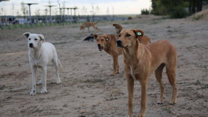 «Почувствуйте себя легендой»: волгоградский собачий приют приглашает на квест по военным развалинам