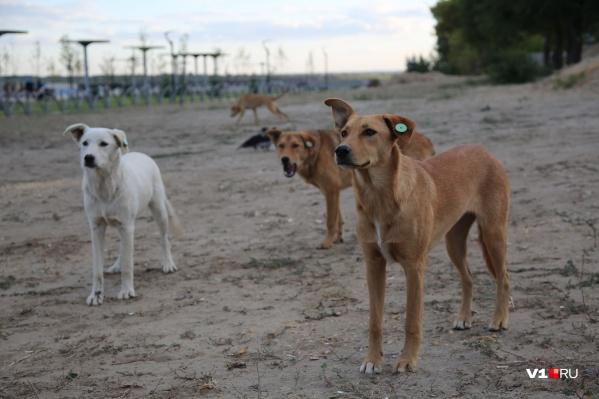 Собаки будут обязательными участниками квеста