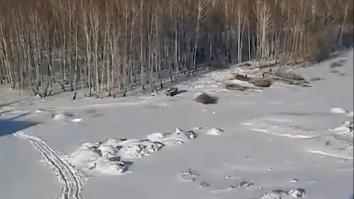 На Северо-Западе Челябинска вырубают деревья без разрешения мэрии