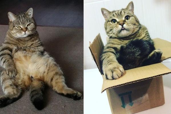 После Масленой недели ни в одну коробку не поместишься!
