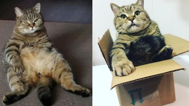 Покажи свой Instagram: в первый день весны рассматриваем аккаунты самых милых омских котиков