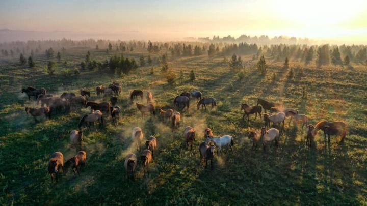 Журнал National Geographic опубликовал снимок фотографа из Уфы