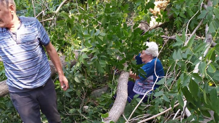 Дерево придавило женщину на улице Котовского