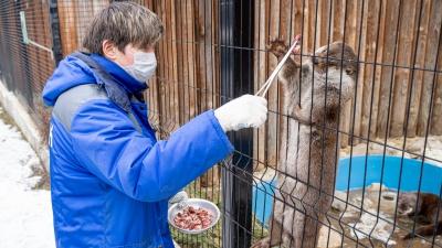 Зверский аппетит: где готовят еду для животных челябинского зоопарка и как их кормят (это мило)
