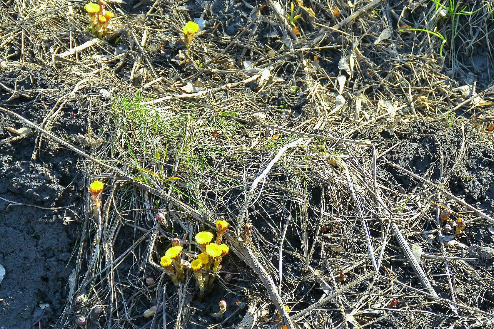 Первые цветы выросли в ПКиО«Сосновый бор»