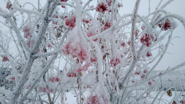 Курганские синоптики предупредили о морозах до -30 градусов